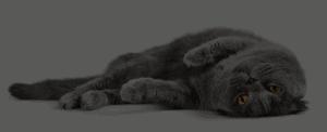 Cat Pet Healthcare Clinic Richmond Valley