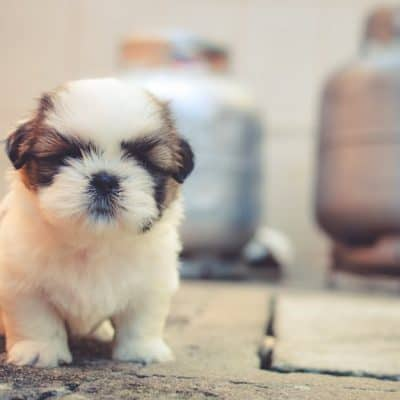Beginners tips to training a puppy