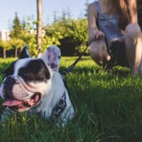 Common health issues faced by brachycephalic dog breeds