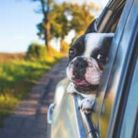 Tips to Travel with your Pet Dog