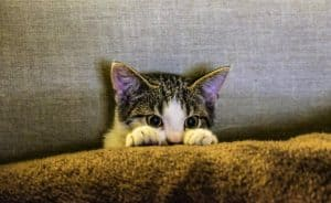 Common Cat allergies to keep an eye out for