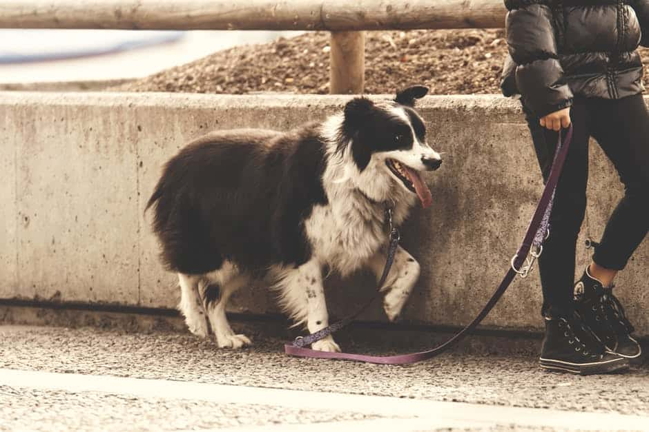 Tips to leash train your dog