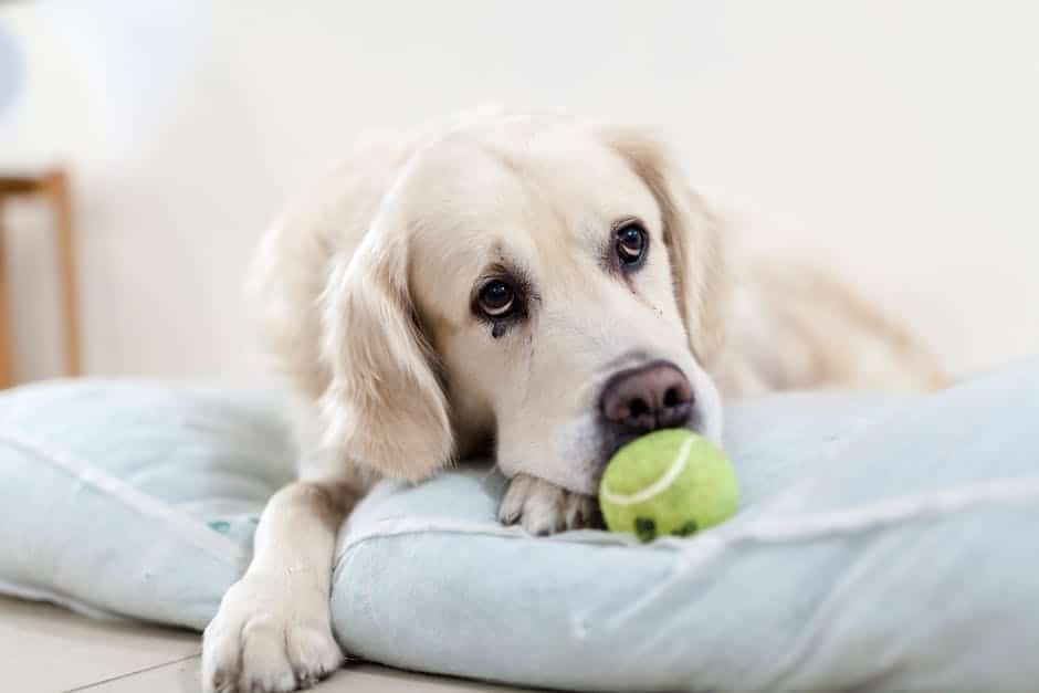 An overview on separation anxiety in dogs