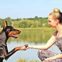 Things to consider before getting your next pet