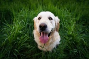 Tips to use food as a bait to efficiently train your dog PART 2