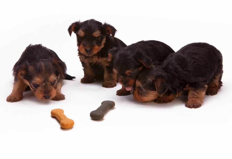 Toxic or danger food for dogs and the consequence of each