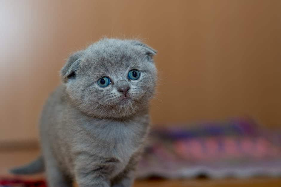 Kitten bottle feeding tips