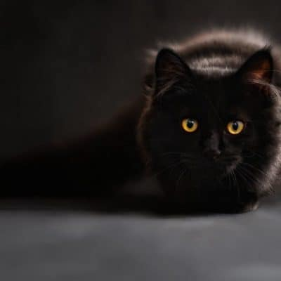 The most popular cat myths debunked PART 2