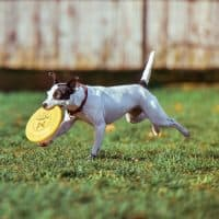 How to help your dog loose weight