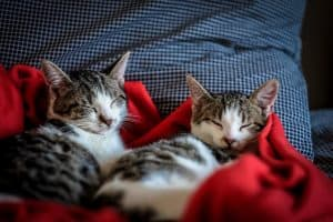 Tips to raising two cats together