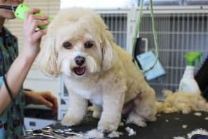 5 Dog Grooming Mistakes to Avoid