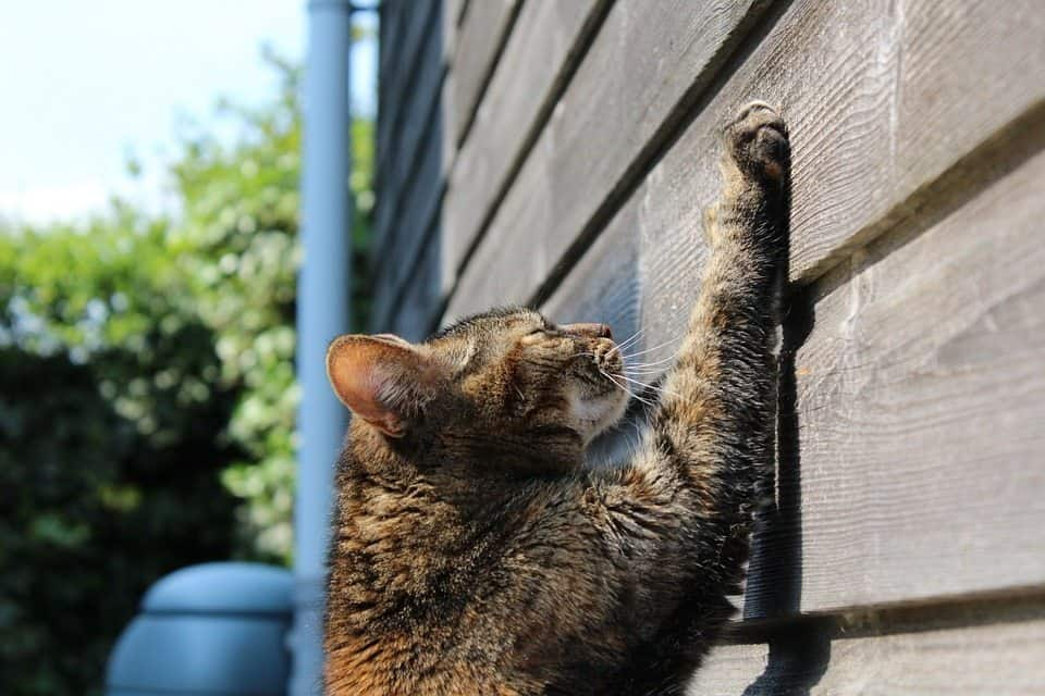 Cat scratching and solutions