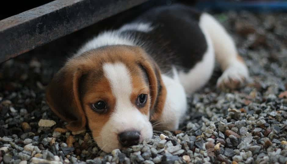 4 Things to consider when choosing a dog breed