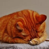 Tips to preventing diabetics in cats