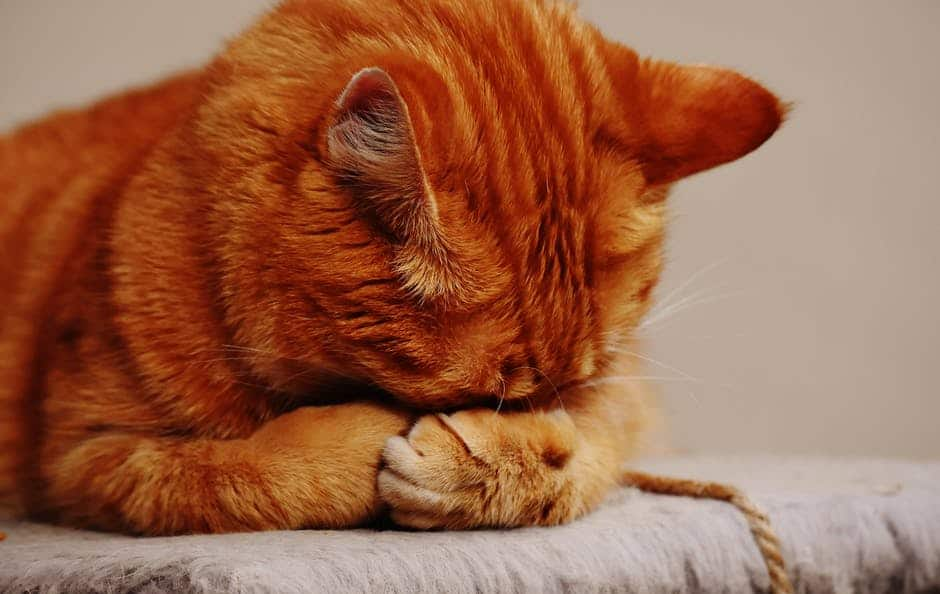 Cat allergies: an overview