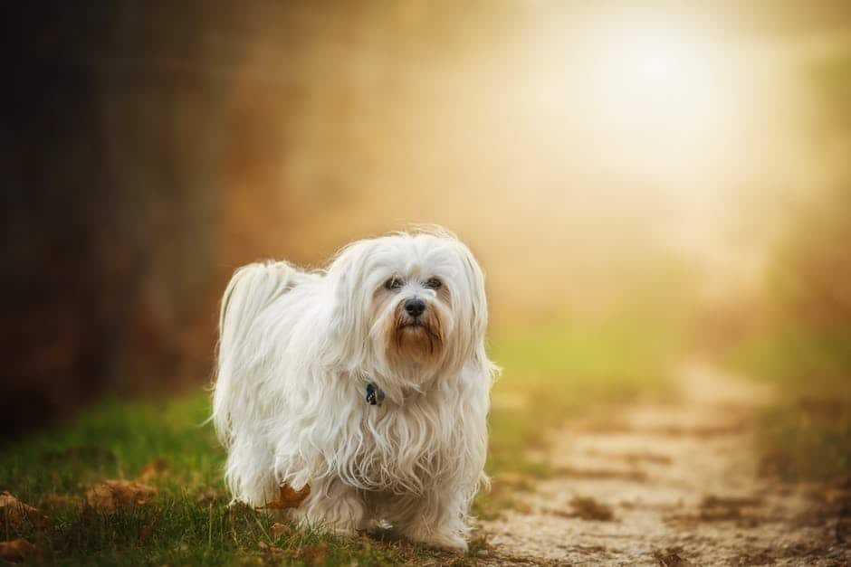 How to maintain your dog's coat healthy and shiny