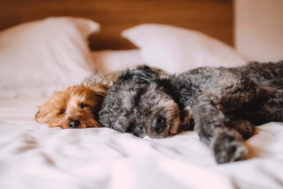 Tips to remove pet stains from your household items