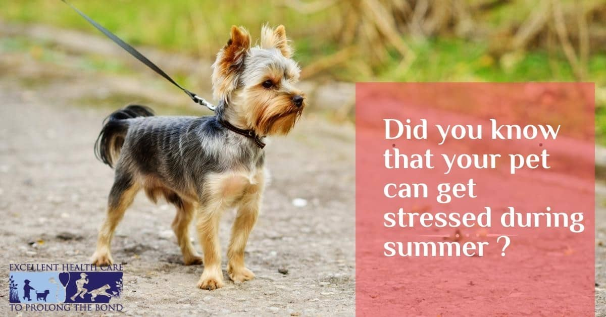 Did you know that your pet can get stressed during summer?