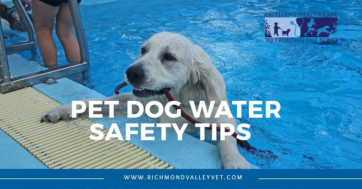 Dog Water Safety Tips
