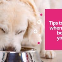 Tips to consider when choosing bowl for your dog
