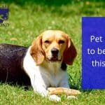 Pet Parasites to be Aware of this Summer