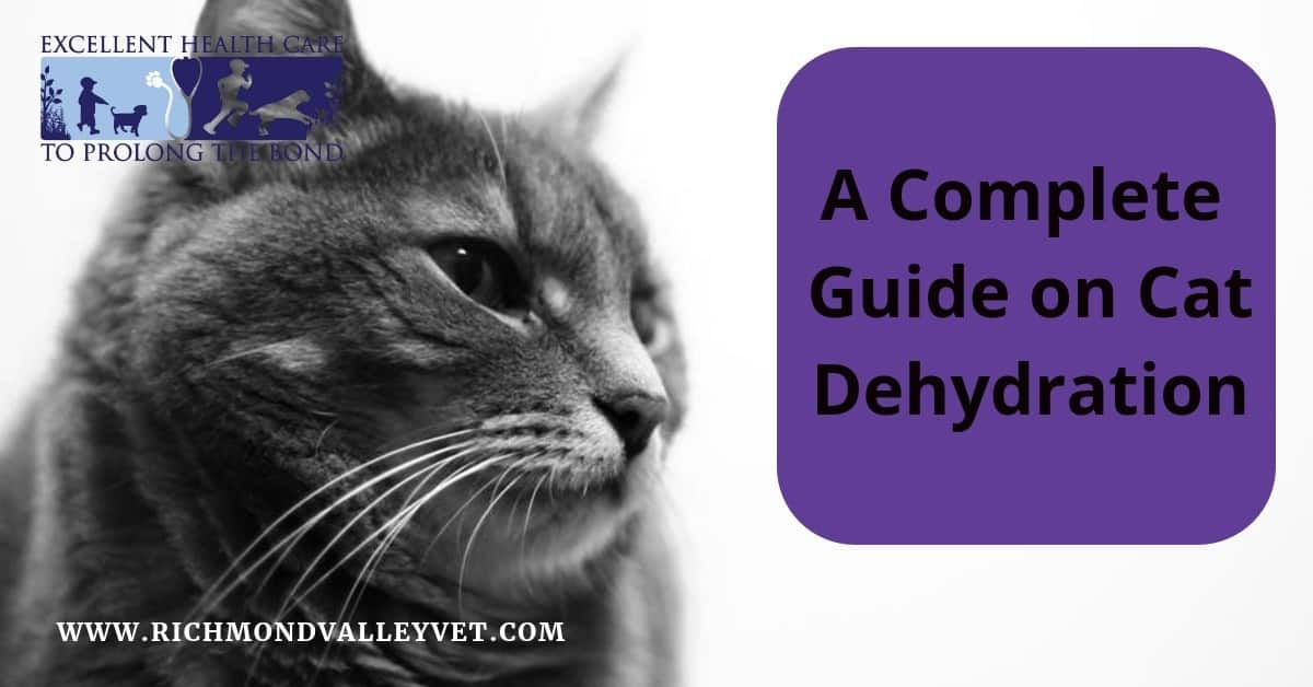 A complete guide on cat dehydration