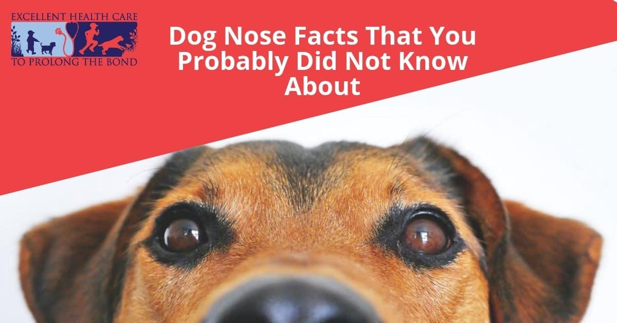 Dog Nose Facts That You Probably Did Not Know About