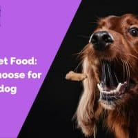 Dry vs. Wet Food_ What to choose for your dog