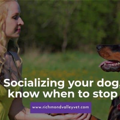 Socializing your dog, know when to stop