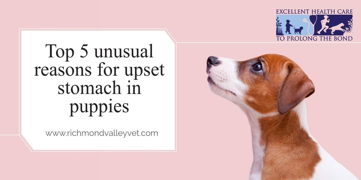 Top 5 unusual reasons for upset stomach in puppies