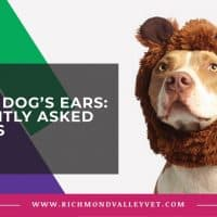 Cropping dog's ears: 5 frequently asked questions