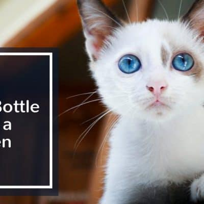 How-to-Bottle-Feed-a-Kitten