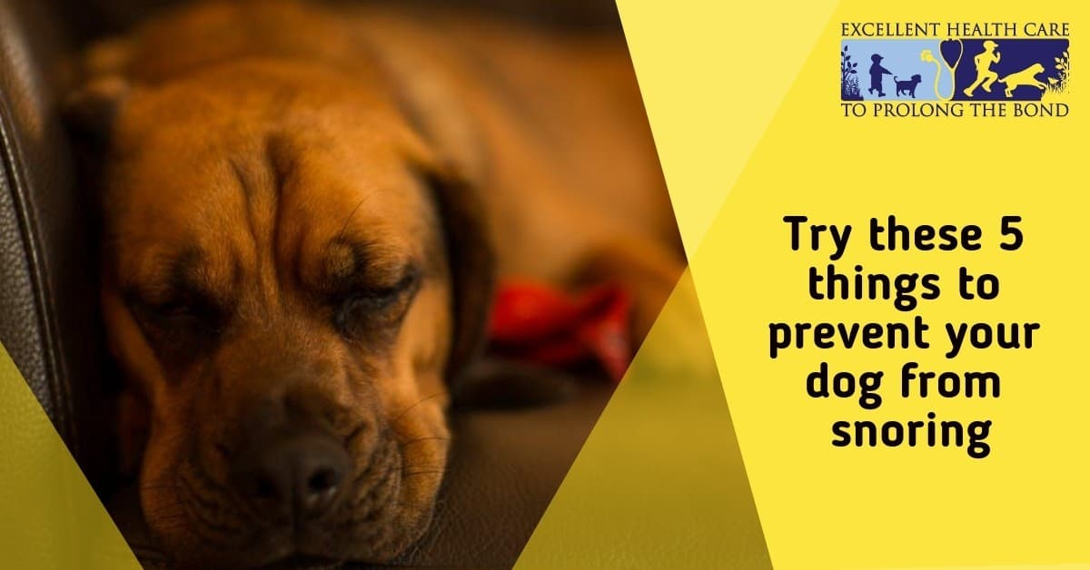 Try these 5 things to prevent your dog from snoring