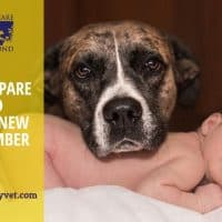 Dog and baby How to prepare a dog to welcome a new family member- part 1