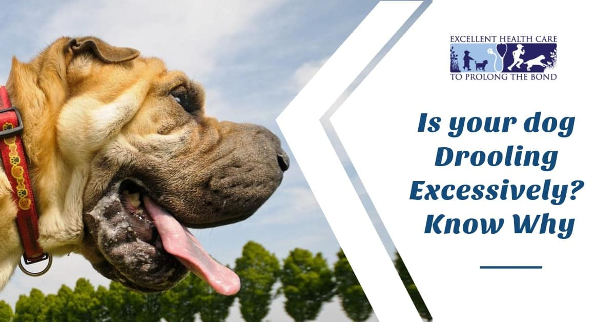 Is your dog Drooling Excessively, know why