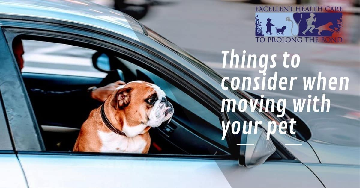 Things to consider when moving with your pet