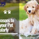 Top 5 Reasons to Groom your Pet Regularly