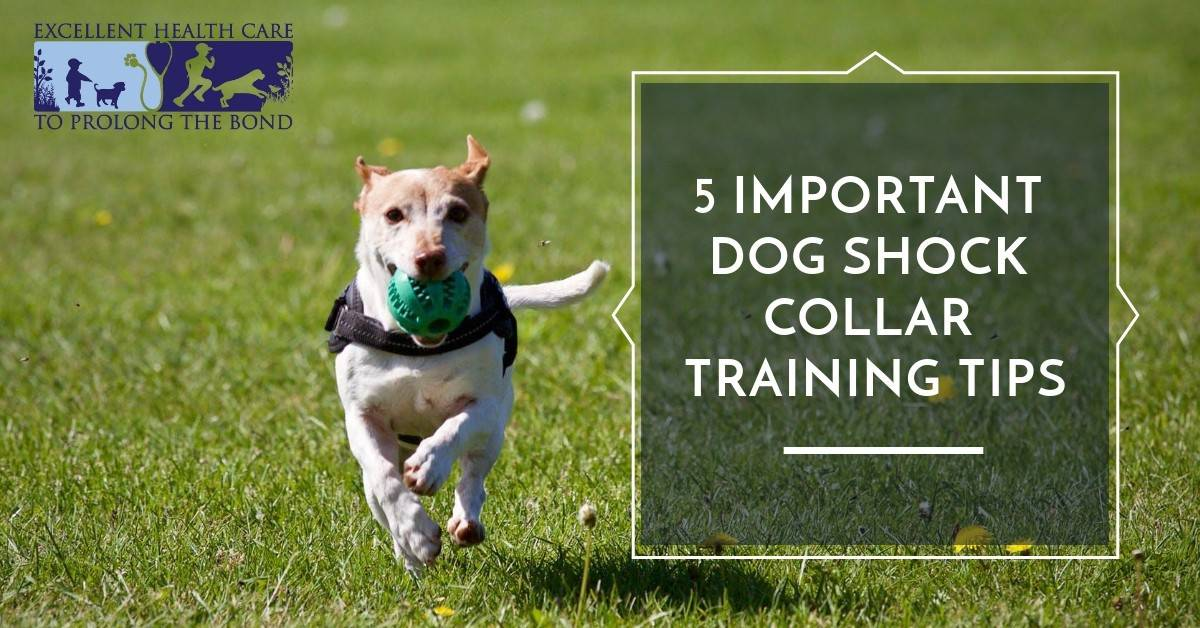 5 important dog shock collar training tips