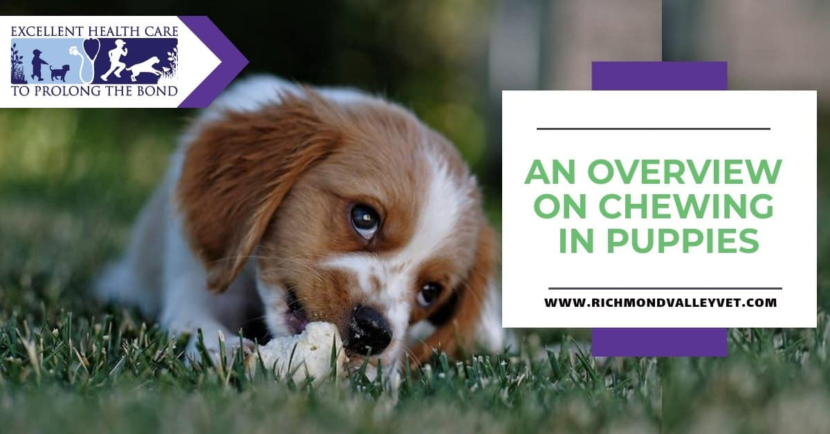 An overview on chewing in puppies