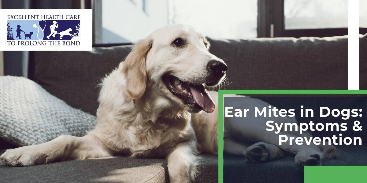 Ear mites in dogs: symptoms & prevention