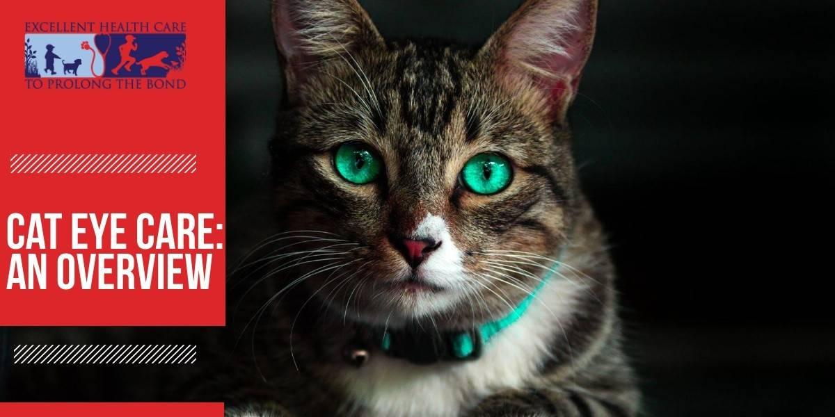 Cat eye care