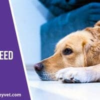 Canine-flu-what-you-need-to-know