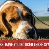 Dog stress- have you noticed these symptoms