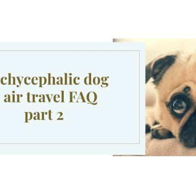 Brachycephalic dog & air travel FAQ part 2