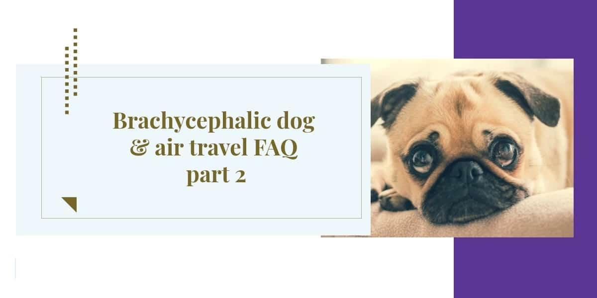 Brachycephalic dog & air travel FAQ part 2