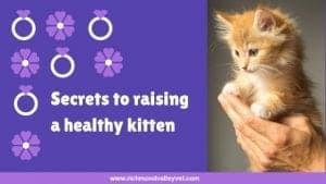Secrets to raising healthy kittens