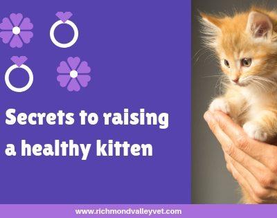 Secrets to raising healthy kittens