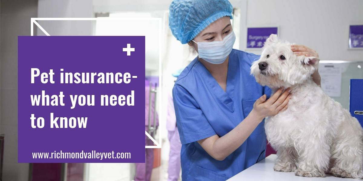 dog in clinic getting examined by nurse