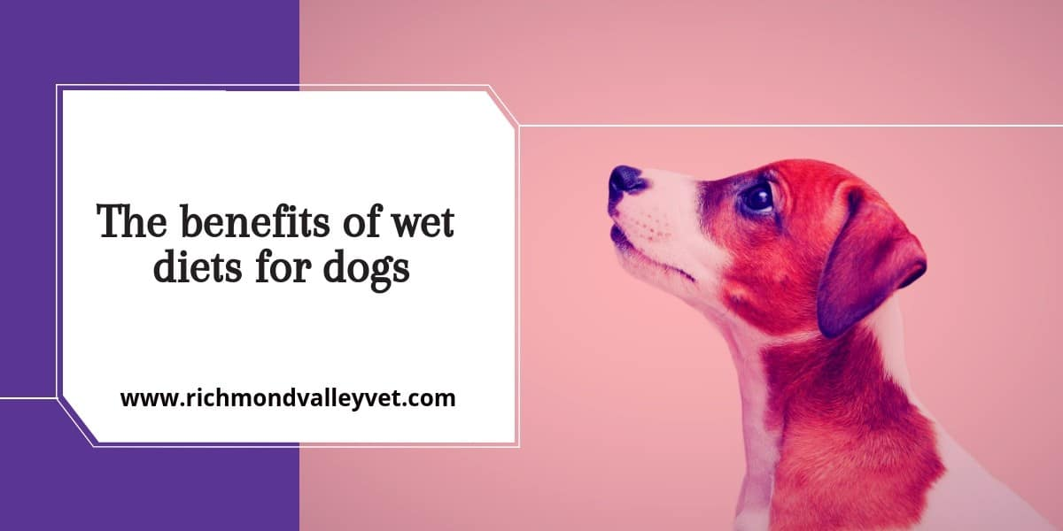 The benefits of wet diets for dogs