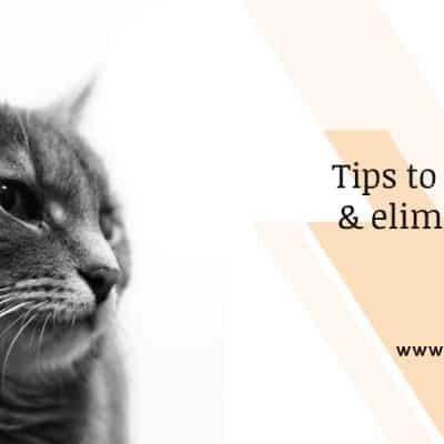 Tips to identifying & eliminating cat fleas